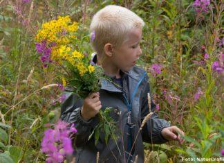 De vilde blomsters dag